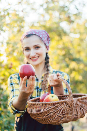 Farmer woman in fruit orchard holding apple in her hands offering