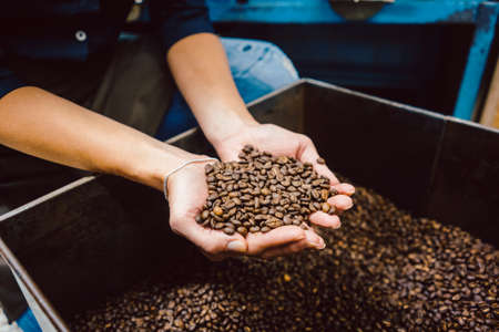 Barista with fresh coffee beans 写真素材