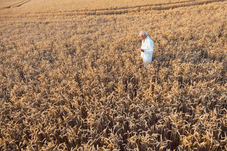 Scientist doing field test of new GMO grain for better yield