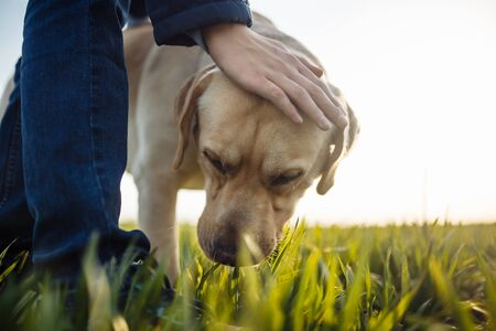 Young boy pets his dog in the green grass field on a bright sunny day. Labrador retriever is being calm and friendly to its owner. Home pet walk concept