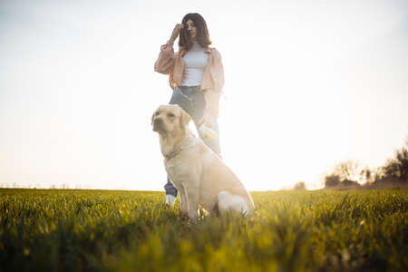 Young labrador retriever sits in a strict dog collar in the green grass field on a bright sunny day with its owner. The dog is looking sideway and being calm. Home pets concept