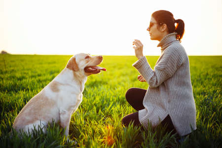 Happy dog training and waiting for a food with a woman on the green field on the sunset. Cheerful labrador retriever sits on the grass with his owner. Home pet play and walk concept