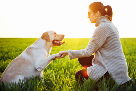 Happy dog gives his paw to a woman sitting on the green field on the sunset. Cheerful labrador retriever sits on the grass with his owner. Home pet play and walk concept Reklamní fotografie