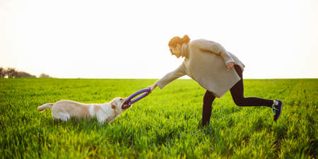 Cheerful and happy dog labrador retriever plays with his young woman owner on a green field on the sunset at spring. Active pet concept