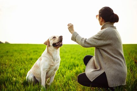 Cheerful and happy dog labrador retriever plays with his young woman owner on a green field on the sunset at spring. Girl trains the dog and offer a treat. Active pet concept