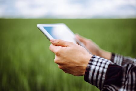 Closeup of a young woman's hands wearing checkered shirt checking harvest progress on a tablet at the green wheat field. New crop of wheat is growing. Agricultural and farm concept