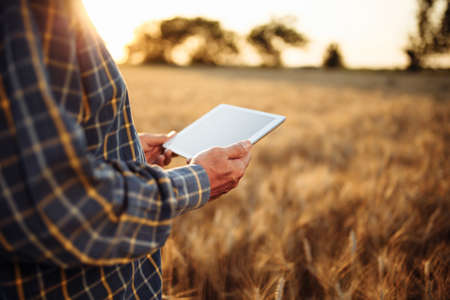 Farmer holding a tablet in his hands checking the wheat harvest progress at the field. Farm worker stands among ripen golden ears of wheat with a mobile device. Technology, rural, business concept Reklamní fotografie - 152670047