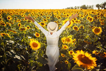 Young woman in a field of sunflowers stands back and looks at the sunset feeling freedom and joy. Female wearing a hat and a white dress with her hands wide open. Happiness and summer concept. Reklamní fotografie - 153229782