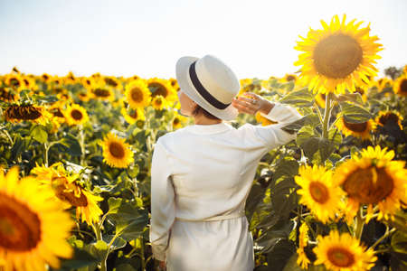 Young woman in a field of sunflowers stands back and looks at the sunset feeling freedom and joy. Female wearing a white dress touches her hat with a hand. Happiness and summer concept. Reklamní fotografie - 153228250