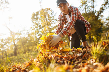 A man being a volunteer collects old yellow and red leaves on a lawn wearing gloves and red shirt. Young communal worker cleans the park from fallen leaves in the autumn. Seasonal job concept Foto de archivo