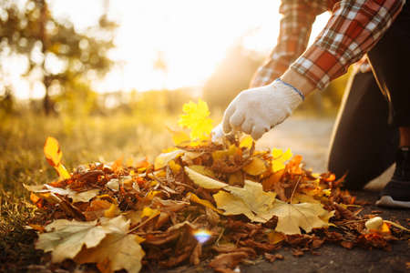 Close up of a male volunteer collects and grabs a small pile of yellow red fallen leaves in the autumn park. Cleaning the lawn from the old leaves. Gardening and seasonal communal work concept Stock Photo