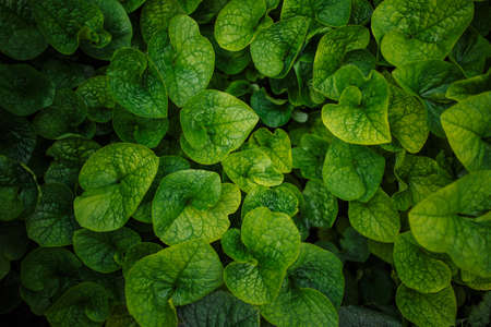 Green leaves background. Plants one tone photograph. Nature pattern concept. Copyspace, place for your text