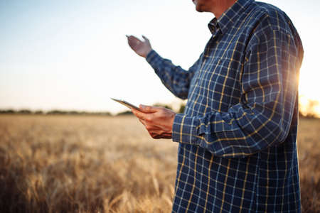 Farmer checking the progress of the harvest with the tablet at the middle of the folden wheat field. Technologies help agricultural workers to keep track of new season crop. Agronomists and gadgets