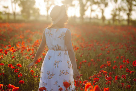 Backview of a girl walking among red poppy flowers at the field. Young woman feels happy and enjoys freedom at the middle of poppy field. Spring and sunset concept