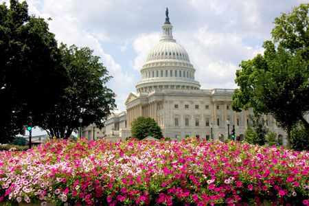 US Capitol building with summer flowers