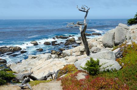 몬테레이, 캘리포니아 태평양 비용 풍경