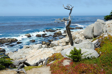 Pacific cost scenery in Monterey, California