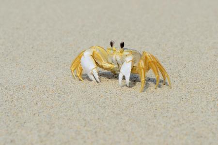 해변에서 유령 크랩 스톡 콘텐츠