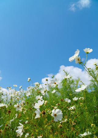 Meadow flowers with blue sky 写真素材