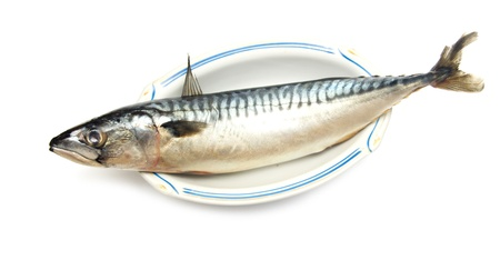 mackerel fish Stock Photo