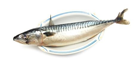 makreel vissen