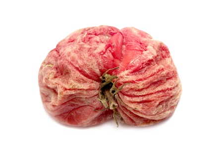 rotten tomato on a white background photo