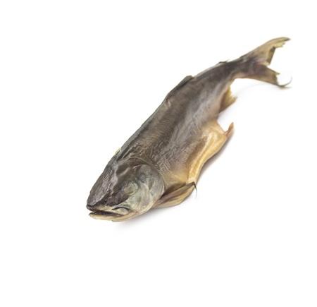salmonidae: fish salmon on white background