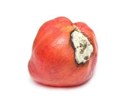 putrefy: rotten tomato on a white background
