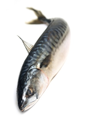 single fin: mackerel fish Stock Photo