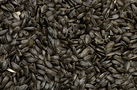 black sunflower seed close up photo