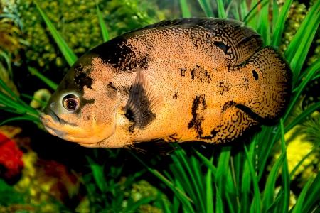 fish in the aquarium Stock Photo - 17860338
