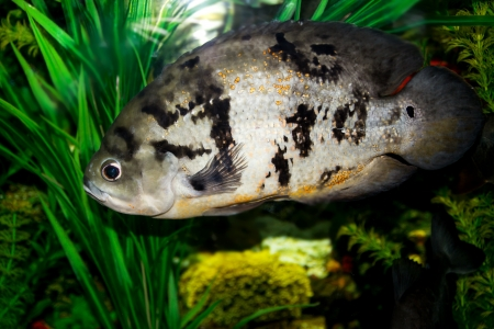 fish in the aquarium Stock Photo - 17771024