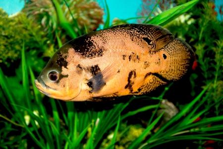 fish in the aquarium Stock Photo - 17771026
