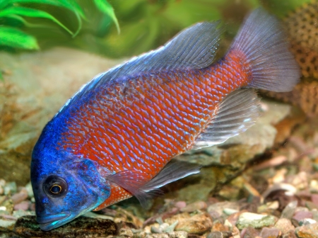 beautiful fish in the aquarium Stock Photo - 17771017