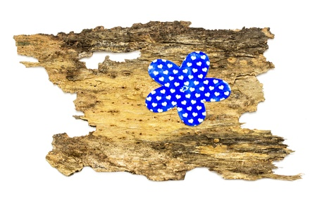layout of the flower on the background of a tree bark Stock Photo - 18053916