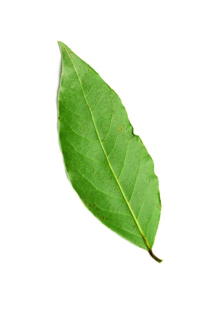 green bay leaf on a white background Stock Photo - 18131858