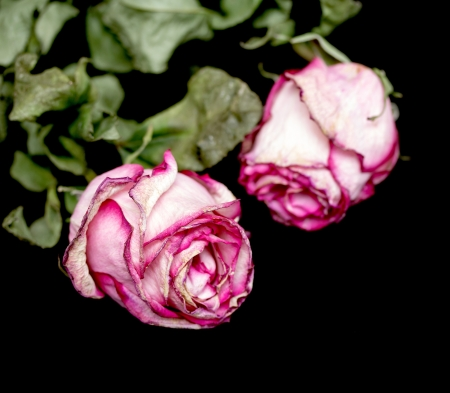 ornamente: withered flowers over black background