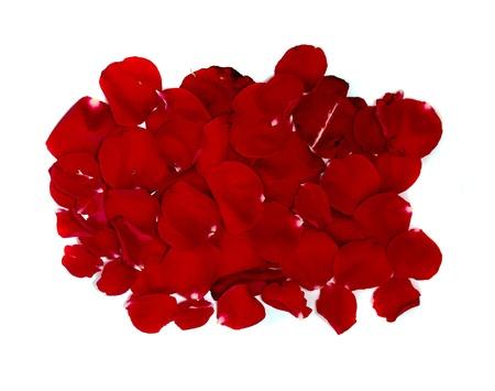 red rose petals photo