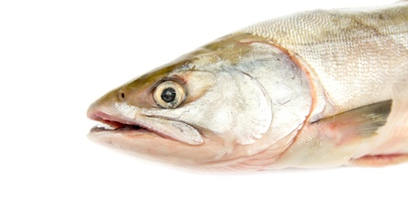 pink fish Stock Photo - 18418500
