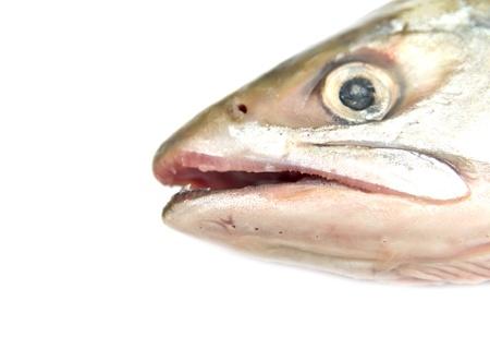 pink fish photo