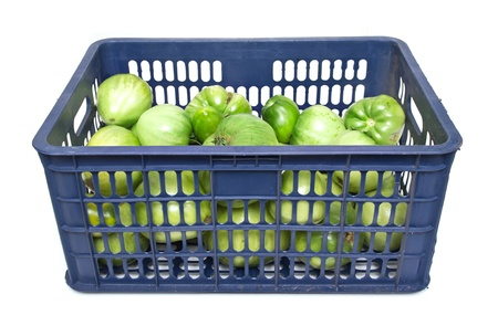 The blue plastic bin, tomato. Stock Photo - 18447241