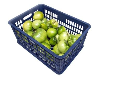 The blue plastic bin, tomato. Stock Photo - 18447393