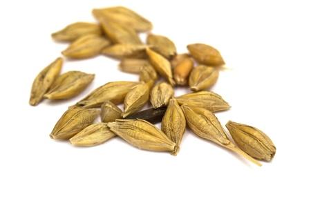 大麦の種子
