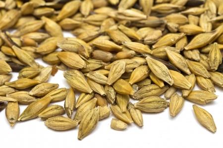 barley seeds photo
