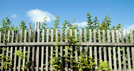 nature of the fence and the sky photo