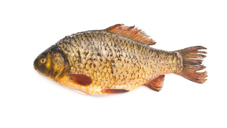 carp fish Stock Photo - 18461107