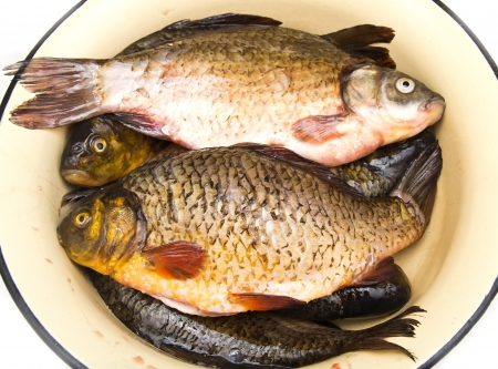 carp fish Stock Photo - 18460946