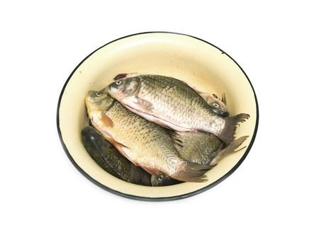 carp fish Stock Photo - 18462990