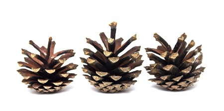 pine cone on a white background photo