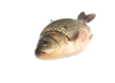 carp fish Stock Photo - 18462842